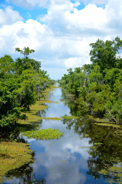 Swamp overlook at Jean Lafitte Preserve