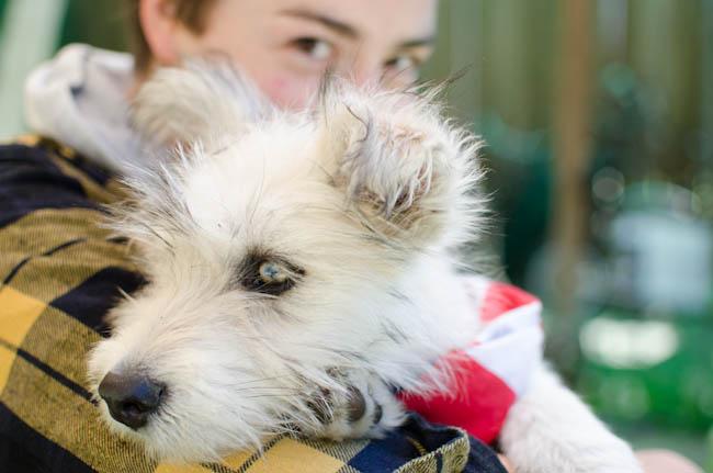Chowder-Puppy-Karlee-5